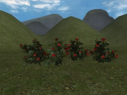 Rosebush (without collision)