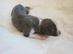 10 days old